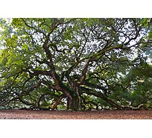 Angel Oak in South Carolina Photographic Print
