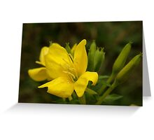 Sundrops ~ Yellow Delight Greeting Card