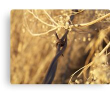 Barbed Wire and Broomweed Canvas Print