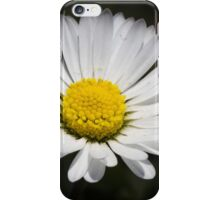 daisy in spring iPhone Case/Skin