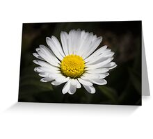 daisy in spring Greeting Card
