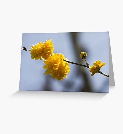 yellow flowers in spring Greeting Card