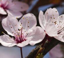 peach blossom in spring Sticker