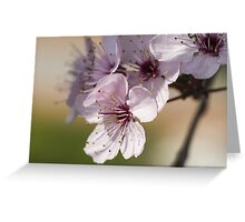 peach blossom in spring Greeting Card