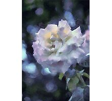 Monet Rose Photographic Print