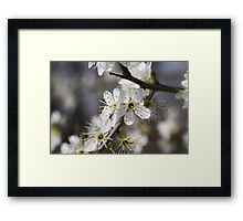 white flowers in spring Framed Print