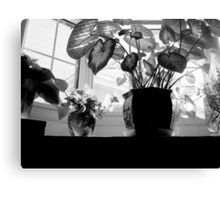 The Bay Window - Shadows and all    ^ Canvas Print