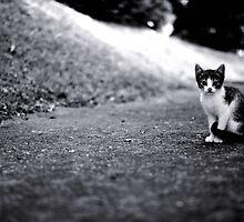 Kitty  by LenkaOBS
