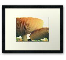 Mushrooms Down Under Framed Print