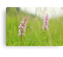 The fragrant orchid Canvas Print