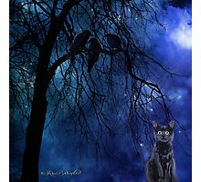 Eyes in the night Photographic Print