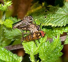 Robber Flies by Kawka