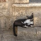 All over the world, cats are lazy ;-) by Thea 65