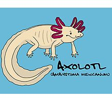 Axolotl Photographic Print