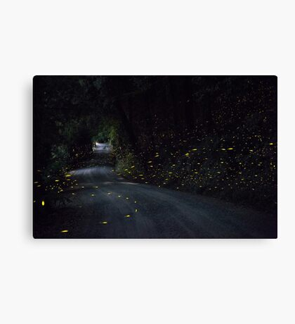 Firefly Road Canvas Print