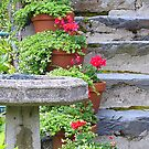 The Bird Table With Geraniums by Fara