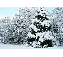 Winter Celebration Photographic Print