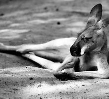 Sleeping Kangaroo Black and White by PatiDesigns