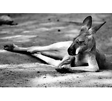Sleeping Kangaroo Black and White Photographic Print