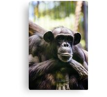 Thinking Chimp Canvas Print