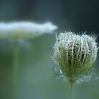 Stages ~ flower & seedpod by Laurie Minor