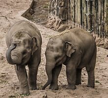 Baby Elephants Playing by Jack Steel