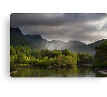 Mangrove Morning Canvas Print
