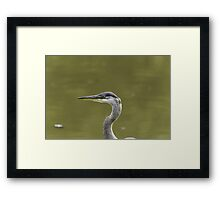 Profile of a Great Blue Heron Framed Print