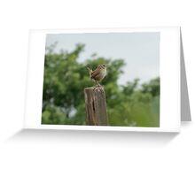 Little Wren  Greeting Card
