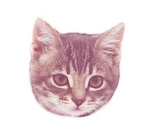 Vintage Kitten  Photographic Print