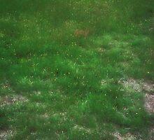A Presence in The Field by Kellice