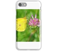 Yellow Clouded Sulfur on Clover iPhone Case/Skin