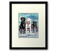 Three Labrador Retriever Dogs Framed Print