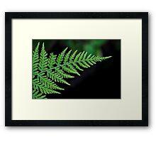 Dryopteris - wood fern Framed Print