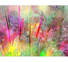 Field Of Coloured Grass Photographic Print