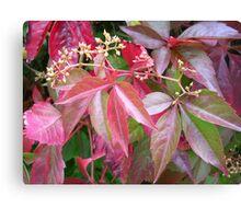 Coloured Foliage Canvas Print