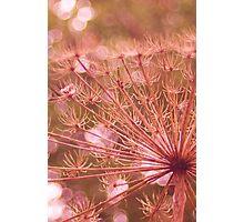 Soft red imagination  Photographic Print