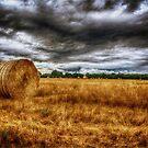 Harvest by Nigel Bangert
