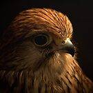 Kestrel Portrait by JMChown