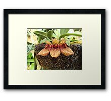 Three Slippers Framed Print