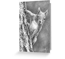 Nuts, Who Said Nuts! Greeting Card
