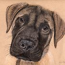 English Mastiff Puppy by Nicole I Hamilton