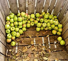 Green Apples by SuddenJim