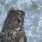 Contemplation - Great Grey Owl Portrait by Skye Ryan-Evans