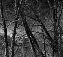 Spooky Forest Sticker