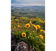 Mount Hood And Flowers Photographic Print