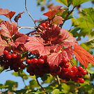 Them's the Berries! by Sandra Fortier