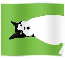 Sleepy Kitten Green Poster