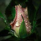 A little rose bud by EbyArts