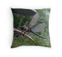 Purple & Blue Dragonfly Photograph/Picture - (Designs4You) Throw Pillow